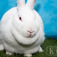 Adopt A Pet :: Betty White - Pflugerville, TX