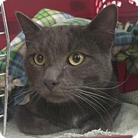 Adopt A Pet :: Balor - North Highlands, CA