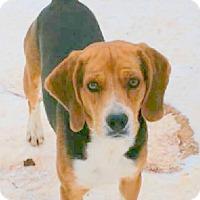 Adopt A Pet :: Roscoe - Lexington, MA