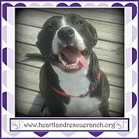 Adopt A Pet :: Marshmellow - Southport, FL