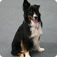 Adopt A Pet :: Jake - Greeley, CO