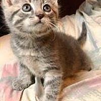 Adopt A Pet :: Mary - Rochester, NY