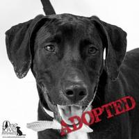 Adopt A Pet :: Swanson - Savannah, GA