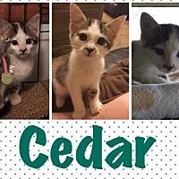 Adopt A Pet :: Kittens!!! - Portland, IN