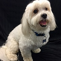 Adopt A Pet :: Chase - Encino, CA