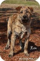 Labrador Retriever/Boxer Mix Dog for adoption in Danielsville, Georgia - Rex