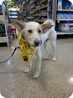 Shepherd (Unknown Type) Mix Dog for adoption in Hampton, Virginia - Echo