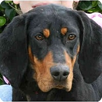 Adopt A Pet :: Daisy 2 - kennebunkport, ME