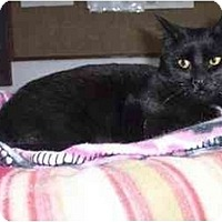 Adopt A Pet :: Kaley - Quincy, MA