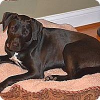 Adopt A Pet :: McCoy - Staunton, VA