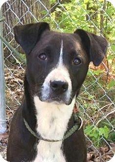 Hound (Unknown Type) Mix Dog for adoption in Harrisonburg, Virginia - Andy