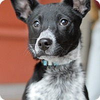 Adopt A Pet :: Zivah - Delano, MN