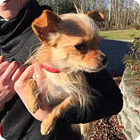 Adopt A Pet :: Cherio - Surrey, BC