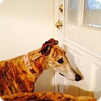 Adopt A Pet :: Finn - Lexington, SC