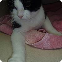 Adopt A Pet :: Paxton - Hamburg, NY