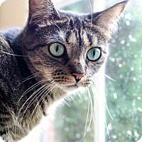 Adopt A Pet :: Gail - Ashland, MA