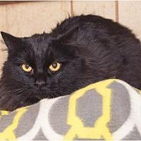 Adopt A Pet :: Alta - Corinne, UT