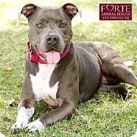 Adopt A Pet :: Rose - Marina del Rey, CA