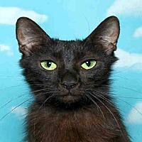 Adopt A Pet :: VIOLET - Alameda, CA