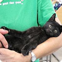Adopt A Pet :: Luca is a lover! - Studio City, CA