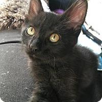 Adopt A Pet :: Dracula - Bulverde, TX