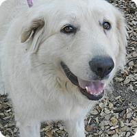 Adopt A Pet :: TRIXIE - Granite Bay, CA