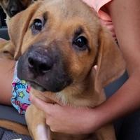 Adopt A Pet :: Fuzzilla - Gainesville, FL