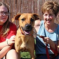 Adopt A Pet :: Ollie - Elyria, OH