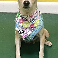 Adopt A Pet :: VANILLA - Fort Pierce, FL
