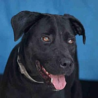 Adopt A Pet :: CHIQUITA - Downey, CA