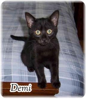 Domestic Shorthair Kitten for adoption in Brighton, Michigan - Demi