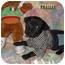 Photo 1 - Labrador Retriever Mix Puppy for adoption in Weeki Wachee, Florida - Pugsley