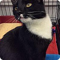Adopt A Pet :: Flynn - Port Republic, MD