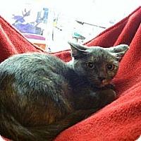 Adopt A Pet :: Jolene - Monroe, GA