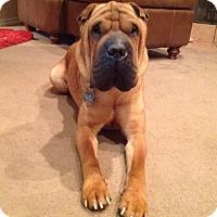 Adopt A Pet :: Haze - Houston, TX
