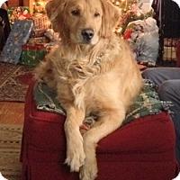 Adopt A Pet :: Rex - New Canaan, CT