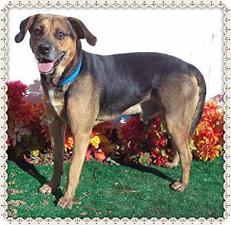 Hound (Unknown Type) Mix Dog for adoption in Marietta, Georgia - ZAK (R)