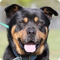 Adopt A Pet :: BRUNO - Jacksonville, FL