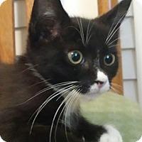 Adopt A Pet :: Trinket - North Highlands, CA