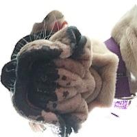 Adopt A Pet :: Baby - Plainfield, CT