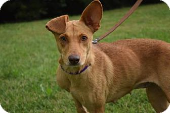 Fox Terrier (Smooth) Mix Dog for adoption in Wichita, Kansas - Lucky