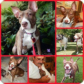Terrier (Unknown Type, Medium) Mix Dog for adoption in Inverness, Florida - Lovebug