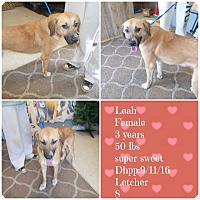 Adopt A Pet :: Leah*ADOPTED!* - Chicago, IL