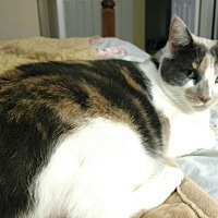 Adopt A Pet :: BabyGirl - Hazel Park, MI
