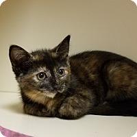 Adopt A Pet :: Tina - Elyria, OH