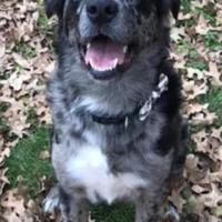 Adopt A Pet :: Danny - justin, TX