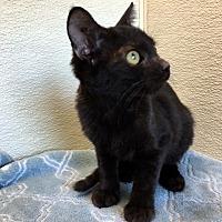 Adopt A Pet :: Audry - Las Vegas, NV