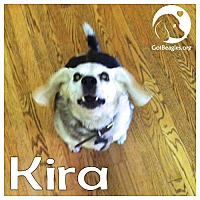 Adopt A Pet :: Kira - Chicago, IL