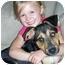 Photo 2 - Husky/Hound (Unknown Type) Mix Puppy for adoption in Powell, Ohio - Zac