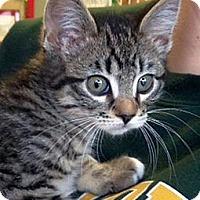 Adopt A Pet :: Sven - Green Bay, WI